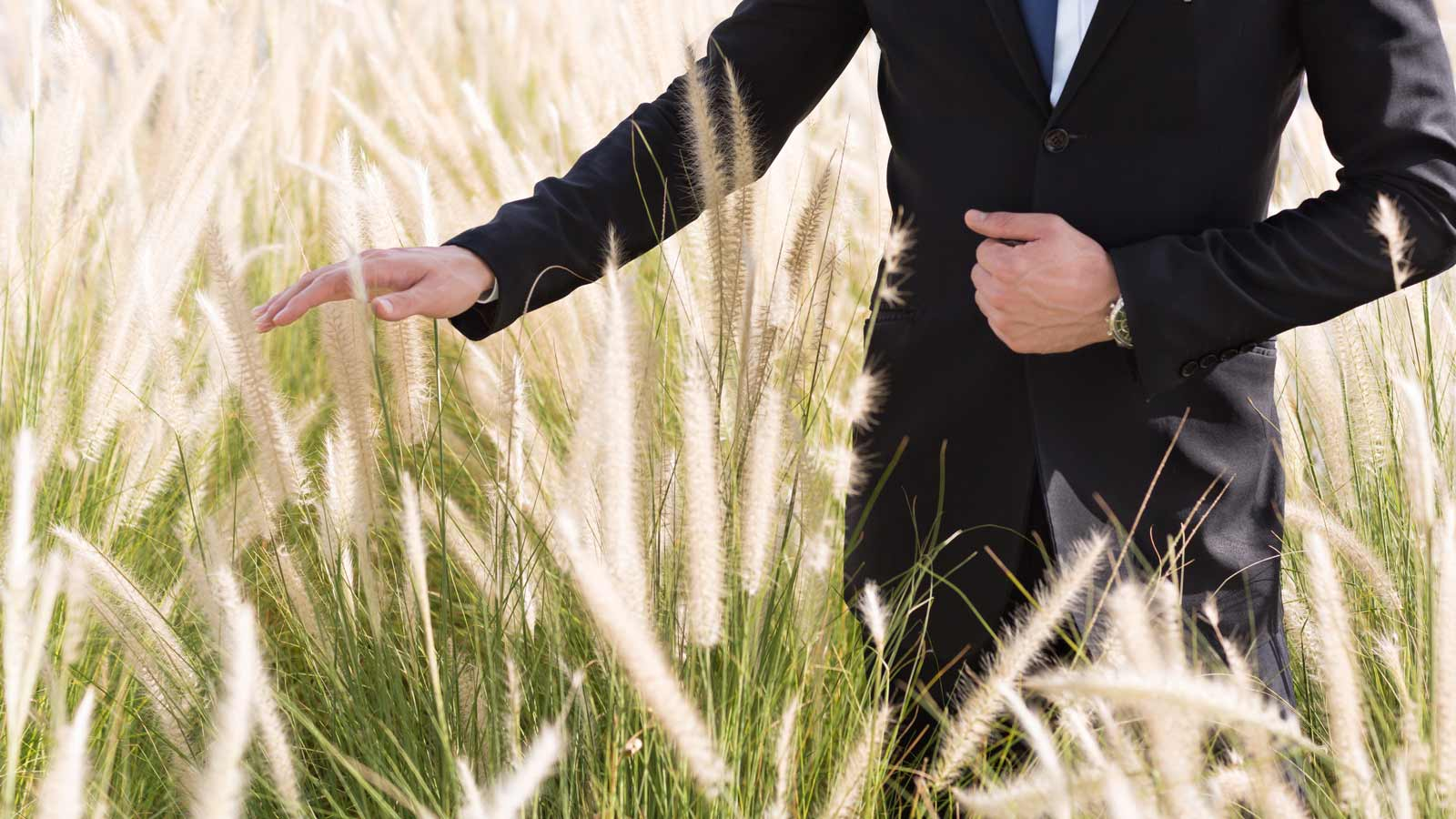 businessman walking through field of wheat and stroking it with his hand